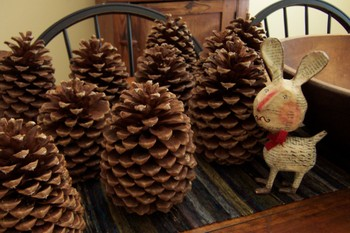 Pineconeforest